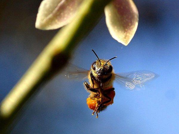Quel est le meilleur moment pour installer une ruche ?